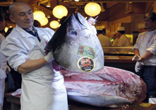 222 kiloluk  ton balığı 1,38 milyon euro