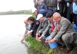 Mersin Balıkları sıkı takip altına alındı