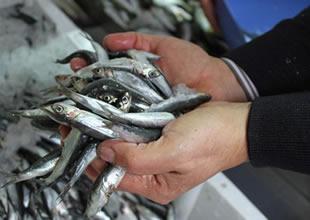 Balıkçılar, hamsi envanteri çalışması istedi