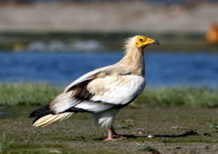 Filyos'taki kuş alanlarına liman tehdidi