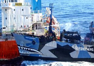 Kutup Denizinde 'balina' dalaşı bitmiyor
