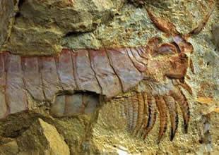Çin'de 520 milyon yıllık fosil bulundu