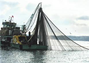 Denizde ticari balıkçılık 3 yıl yasaklansın