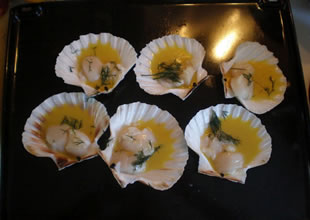 Dalgıçların topladığılezzet: Deniz tarağı