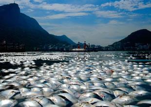 Olimpiyat Gölü ölü balıklarla kaplandı