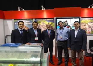 Türk balıkları Amerika'ya doğru yüzüyor