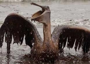 Deniz kirliliğine çözüm : Tavuk tüyü