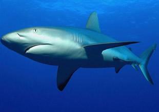 Köpekbalığı derisi bilime ilham veriyor