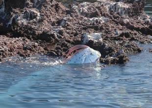 Depremin habercisi balık: Oarfish