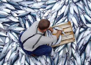 AB, aşırı avlanmanın önüne geçecek