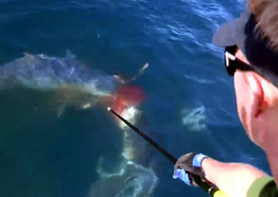Dev köpekbalığı böyle dehşete düşürdü