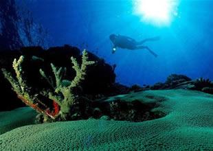 Okyanusun gizemli yaşamı Van'da açılacak
