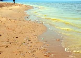 Sinop sahilinde ölü denizanaları korkuttu