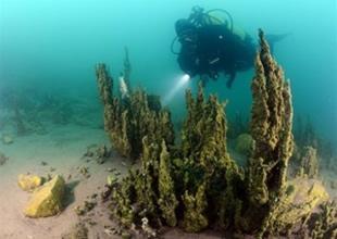 Van Gölü'nde mercan kolonileri bulundu