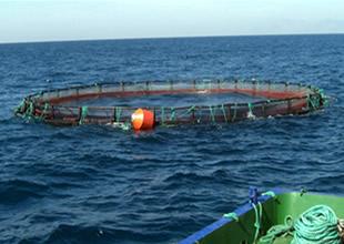 Doğu Karadeniz'de kültür balıkçılığı yüzde 5,5 arttı