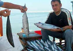 Boğazda Balık Bolluğu