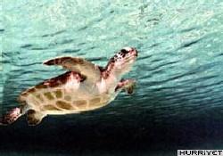 Deniz Kaplumbağa Konferansı Başladı