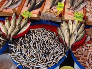 Boğaz'da 30 balık türü yok olmak üzere