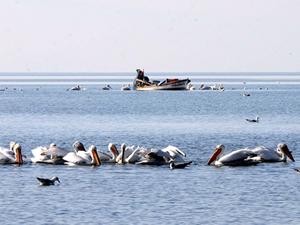İzmir Körfezi'nde oksijen seviyesi yükseliyor.