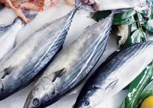 Karadeniz'de balık azaldı, tezgahları kültür balıkları süslemeye başladı