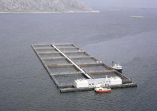 Larnaka'da balık çiftliğine gemi çarptı