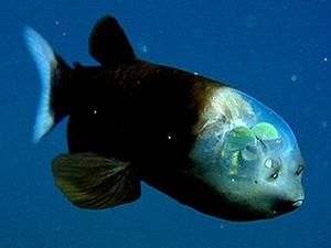 İnsan ve balık beyinleri benziyor