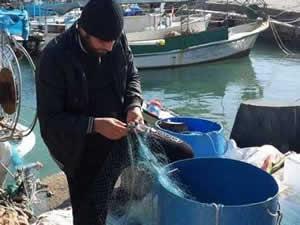 KKTC'de balıkçıların yüzü 'Gamya Balığı' ile güldü