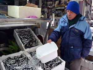 Balıkçıları bu sezon hamsi üzdü, palamut sevindirdi