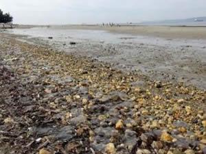 Çanakkale'de deniz 30 metre çekildi, halk deprem korkusu yaşıyor