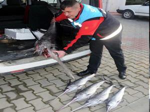 125 santimetrenin altında Kılıç balığını tutmak yasak