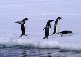 Antarktika buzulları 30 yılın rekor seviyesinde