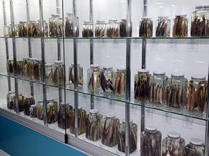 Rize'de tatlı su balıkları için müze kuruldu