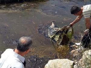 Çamgazi Baraj Göleti'ne, petrol atığı döküldü