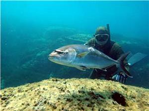 Türkiye'de zıpkınla avlanan balıkların satışı yasak