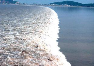 Bilim adamından 'tsunami' çözüm bombası