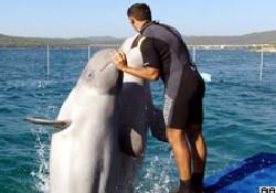Yunuslarla yüzme imkanı...
