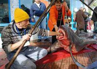 Marmara'da 3 metrelik camgöz yakalandı