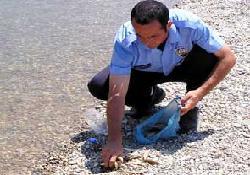 Alanya'da binlerce balık öldü!