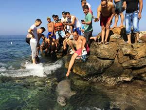 İzmir'de plajda ortaya çıkan Akdeniz foku şaşırttı