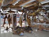 Deniz Canlıları Müzesi'nin yeni üyeleri görücüye çıktı