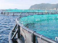 Artvin TSO, su ürünleri yetiştiricilerine destek tebliği yayınladı