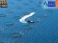 Türkiye'de su ürünleri yetiştiriciliği artıyor
