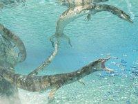 İtalya'da 70 milyon yıllık deniz kertenkelesi fosili keşfedildi