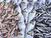 Balık fiyatları bir türlü düşmüyor