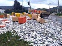 Didim'de tonlarca balık karayoluna saçıldı