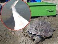 Kuşadası'nda yunus ve caretta caretta ölüleri kıyıya vurdu
