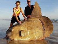 Avustralya'da kıyıya güneş balığı vurdu