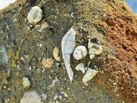 Muş'ta deniz canlılarına ait 11 milyon yıllık fosiller bulundu