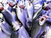 Tezgahları kültür balıkları süslemeye başladı