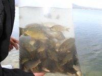 Beyşehir Gölü'ne 200 bin yavru sazan bırakıldı